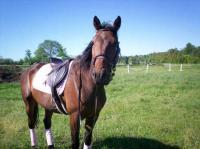 fpp pokerstars sirven comprar caballos