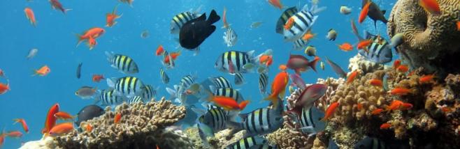 El ecosistema [Foto: Pixabay]